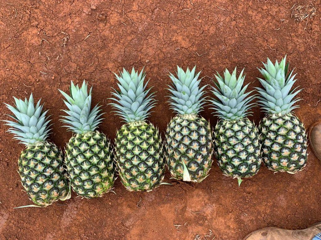Pineapple Sizes