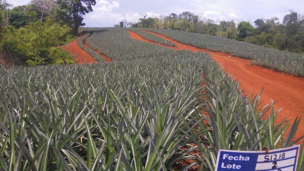 Buy farm Costa Rica, Costa Rica
