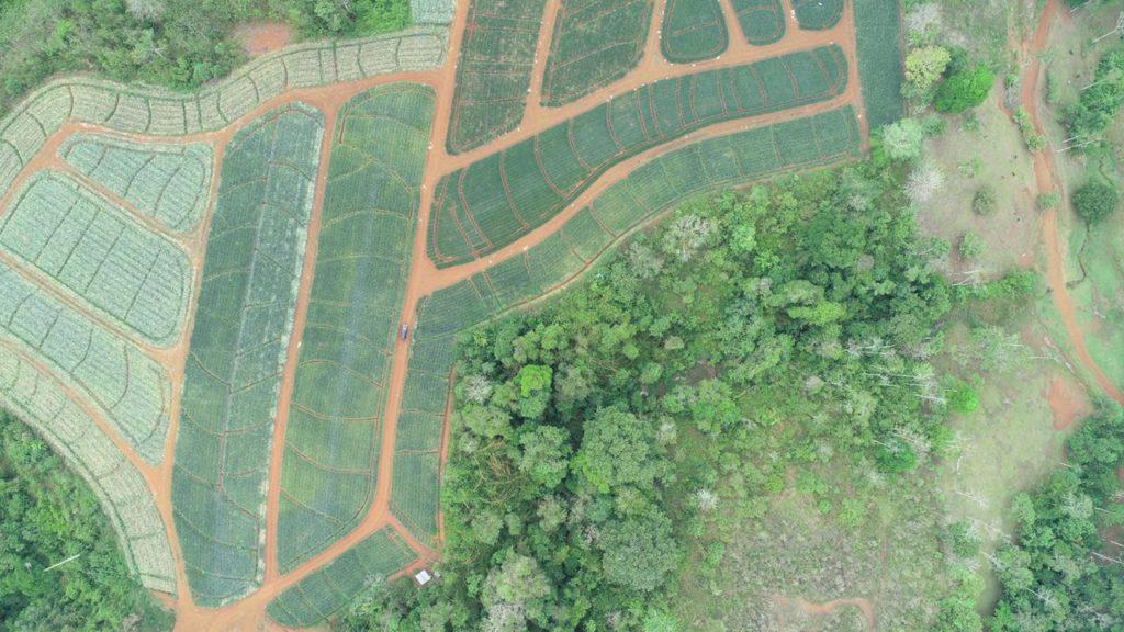 Buy a farm in Costa Rica