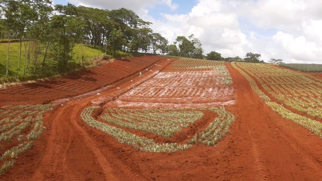 Invest Costa Rica Pineapple farm