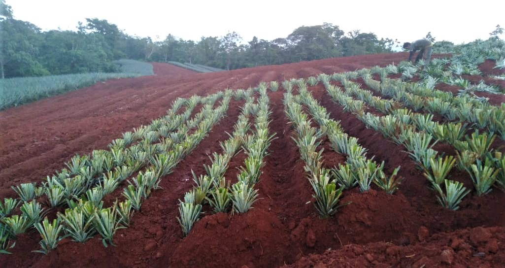 Farm plantings. Seedlings