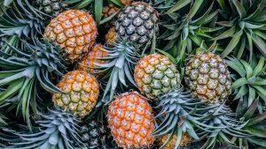 """pineapple Costa Rica"