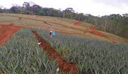 Crop Fertilizing