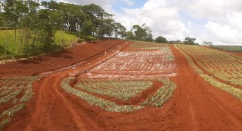 gallery, Farm planting, Costa Rica